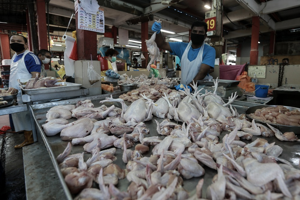 Citing food safety, Penang city council gives market poultry sellers till March 31 to install chillers