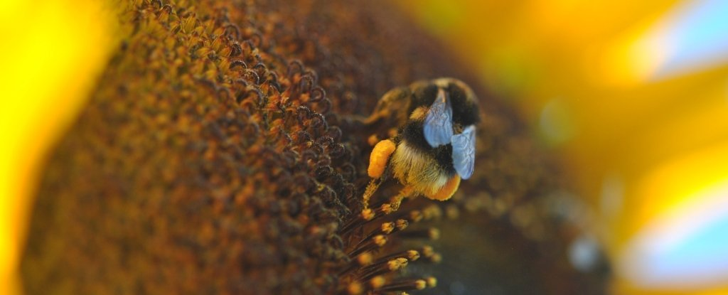 Bumblebees Bite Plants to Make Them Bloom, Scientists Find