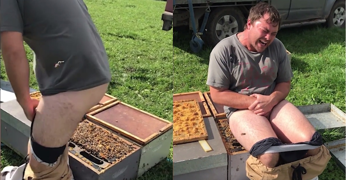 Man wins horrible bet by sitting on beehive with no pants