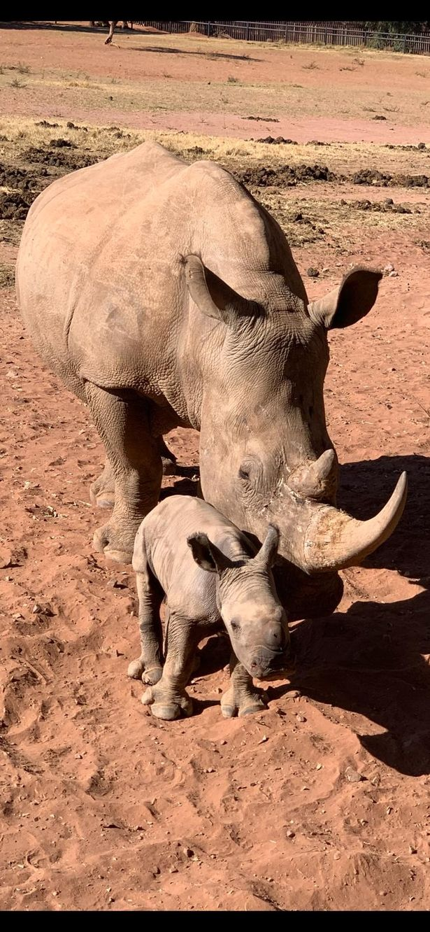 'I swapped my supercars to help save rhinos - and I've never been happier'