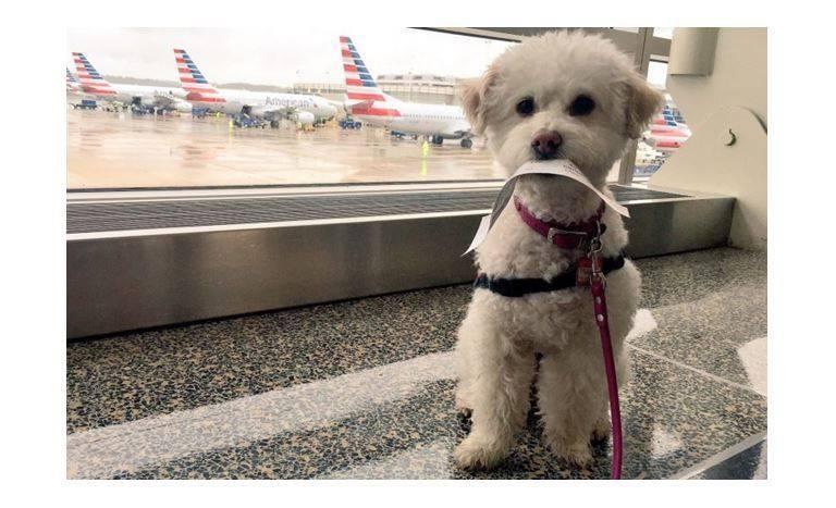 【终于团圆了】疫情之下新兴行业?私人飞机专门载宠物猫猫狗狗去见主人!