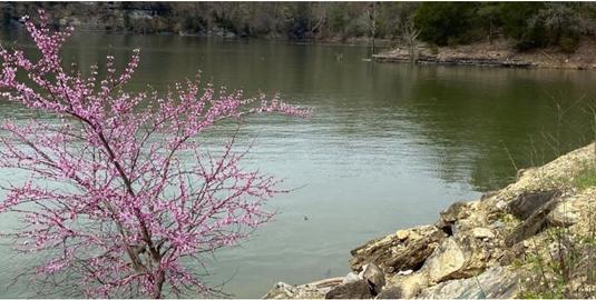 2名中国留学生在美国搭游船意外被水冲走 不幸身亡