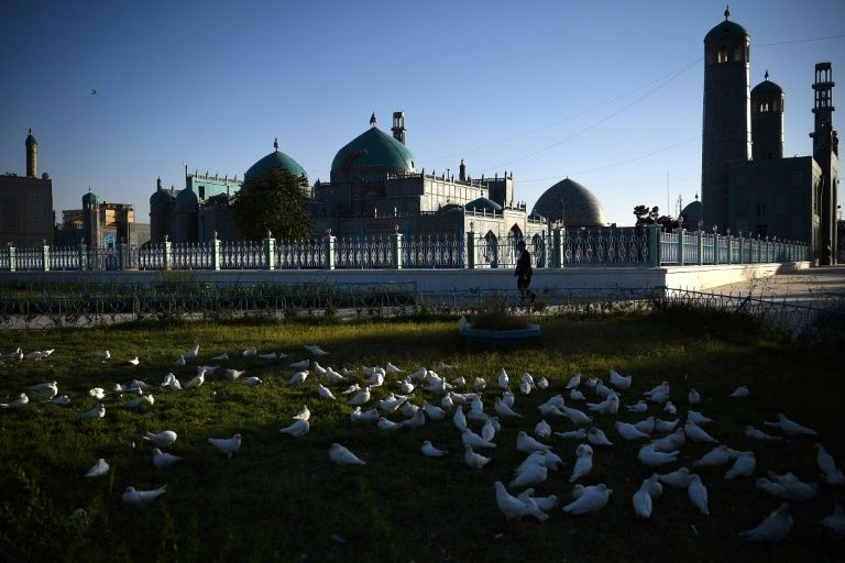 Doves starve at famed afghan mosque shuttered due to virus