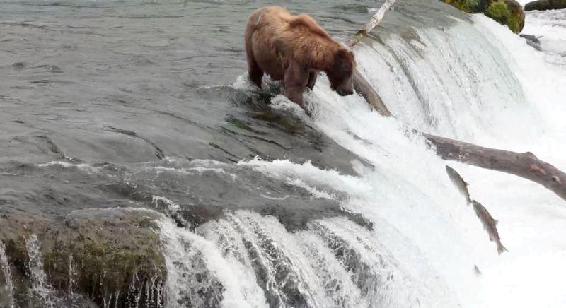 Trump administration ends ban on killing Alaska bear cubs, wolf pups