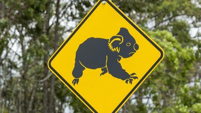 保护考拉栖息地为重 澳大利亚昆州亿元风电场项目被否