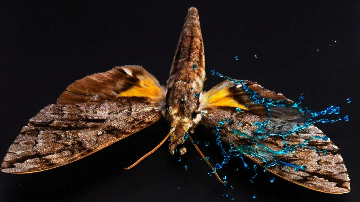 Incredible High-Speed Video Shows How Armor on Butterfly Wings Protects Against Heavy Rain