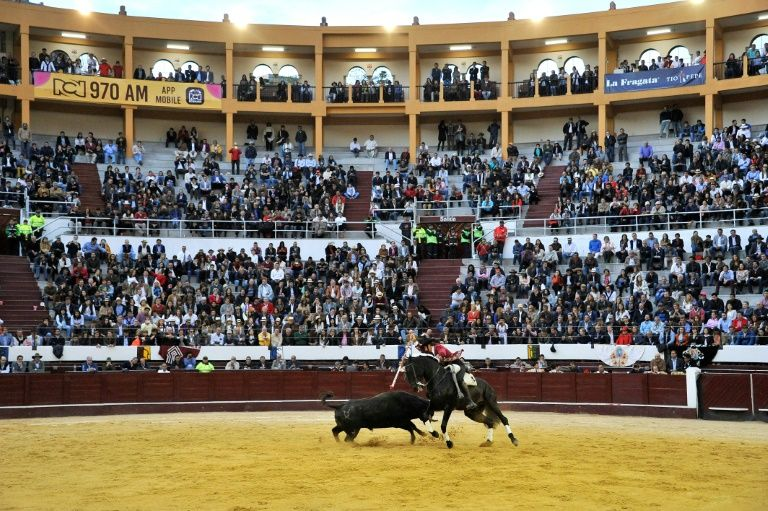 Colombia capital to ban killing, animal abuse in bullfights