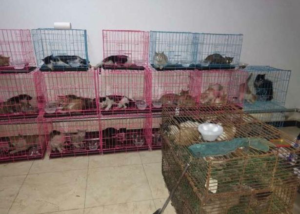 Distressing moment 700 cats crammed into rusty cages 'ready to be served as food'