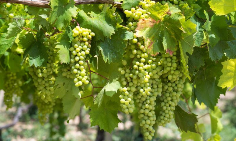 For interesting white wines, look to Italy