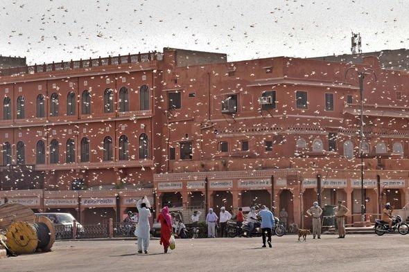Biblical locust plague: Giant swarm find new corridor in ferocious attack