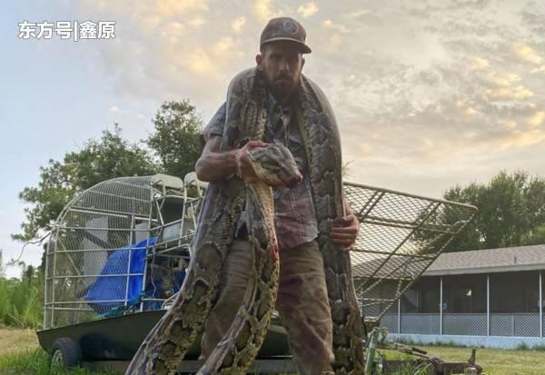 捕蛇男与蟒蛇扭打被咬伤,最终成功将其制服惊险画面曝光!