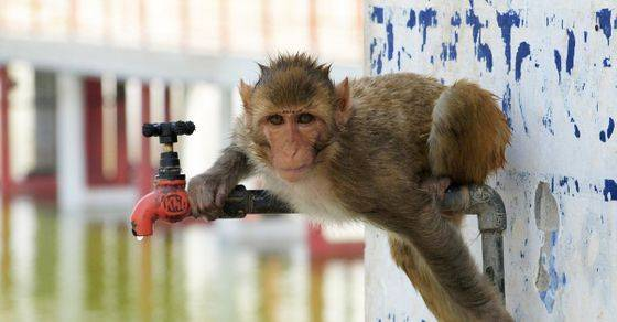 """印度一只""""酒鬼""""猴子咬伤250人,有一人被严重咬伤不幸离世!最终这猴子被这样对待!"""