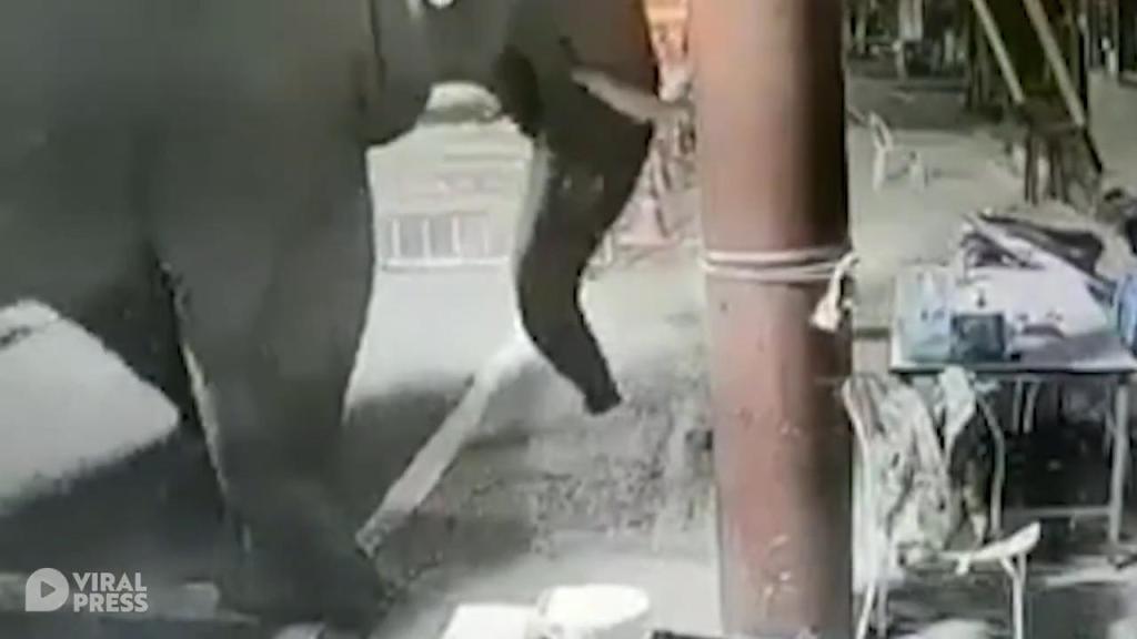 泰国野象闯入公路检查站 工作人员戏称:它想做个体温检查