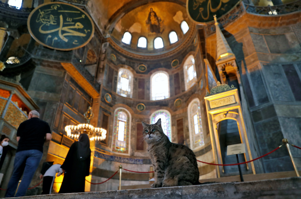 Farewell Gli, famed feline of Hagia Sophia mosque