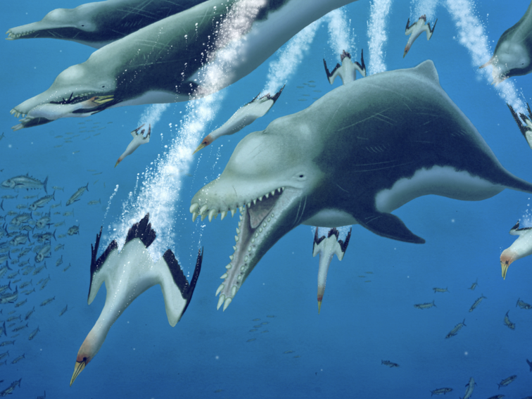 Massive extinct dolphin was an apex predator with whale-like features