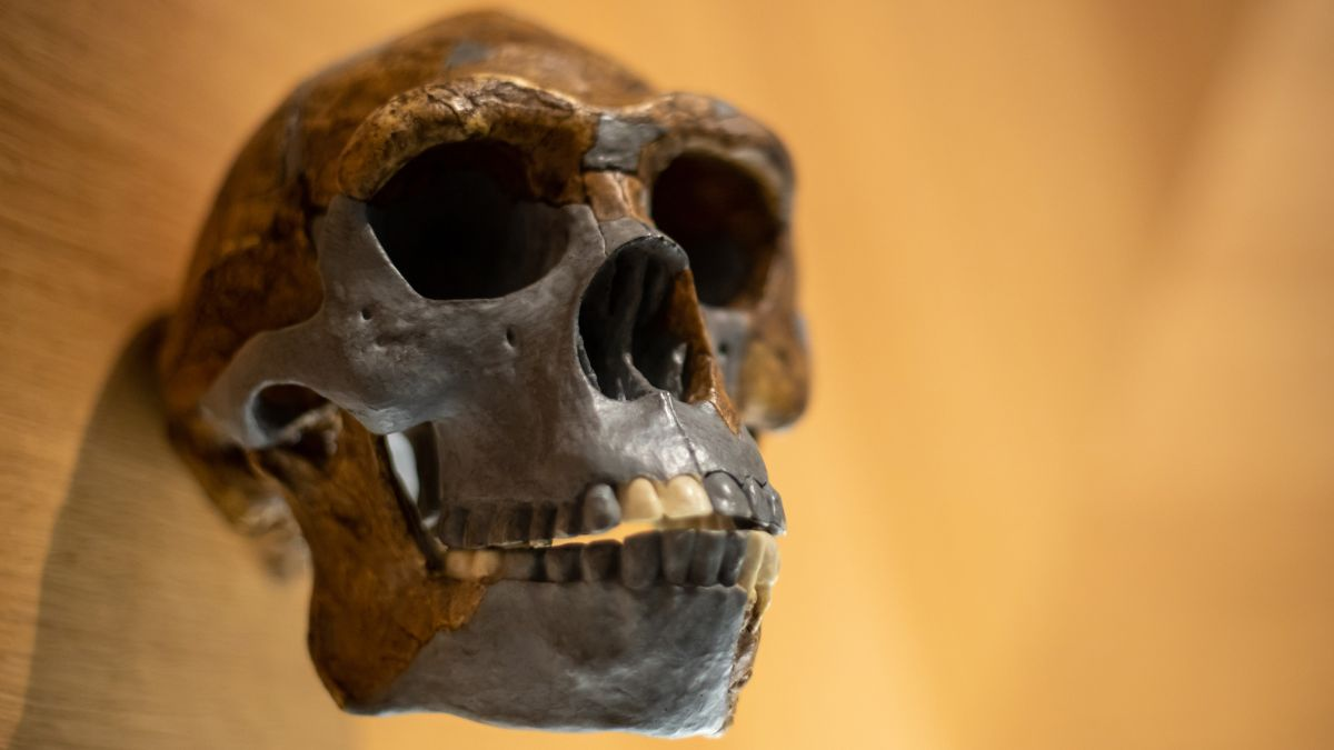 Mystery ancestor mated with ancient humans. And its 'nested' DNA was just found.