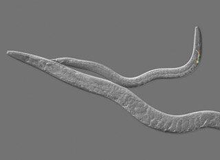 Biology blurs line between sexes, behaviors