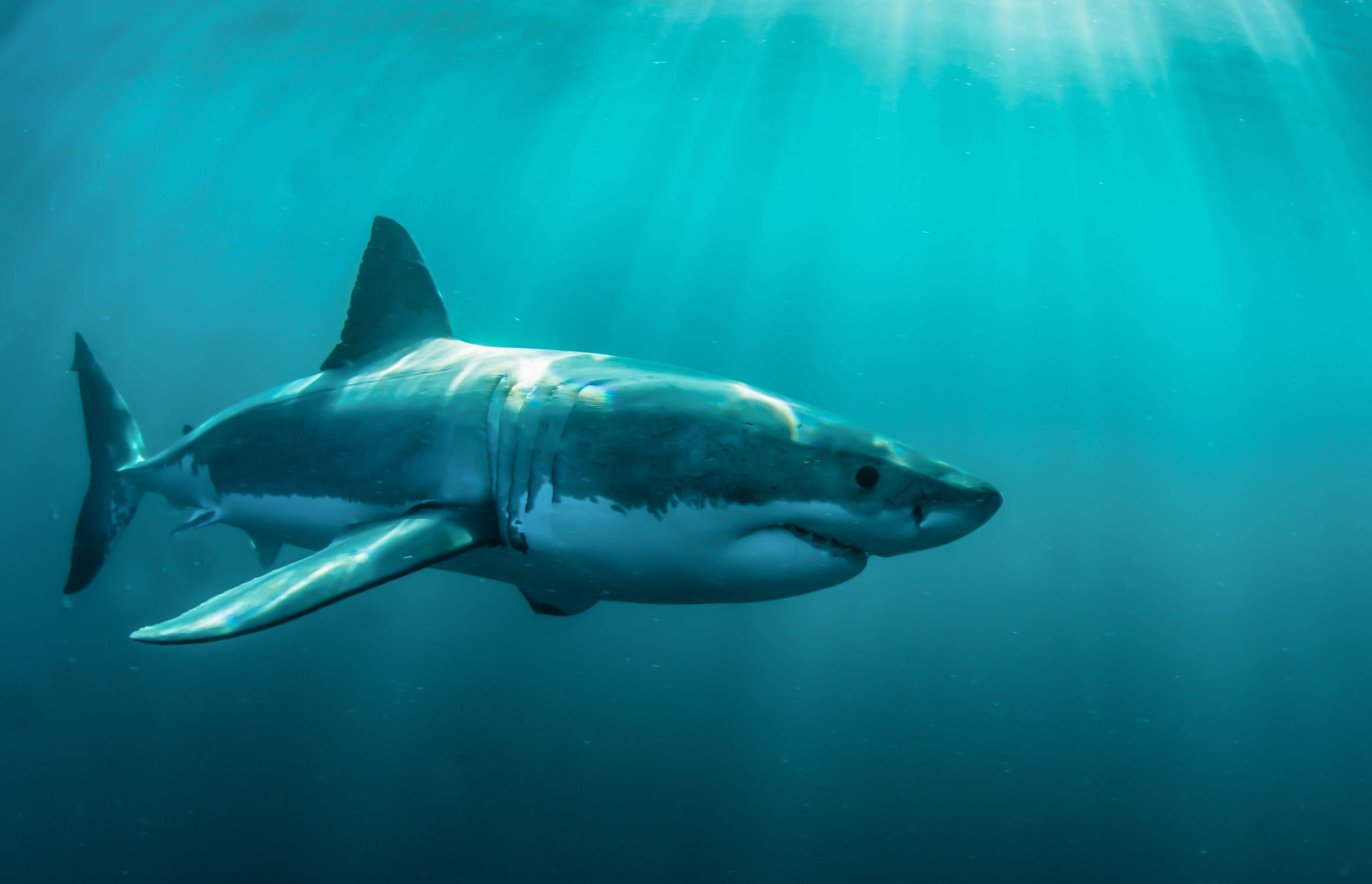 Sharks found living in an active volcano stun scientists