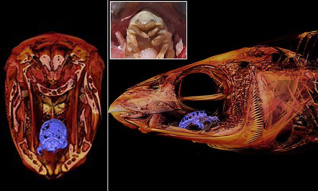 CT scan shows 'tongue-eating louse' in place of a fish's tongue