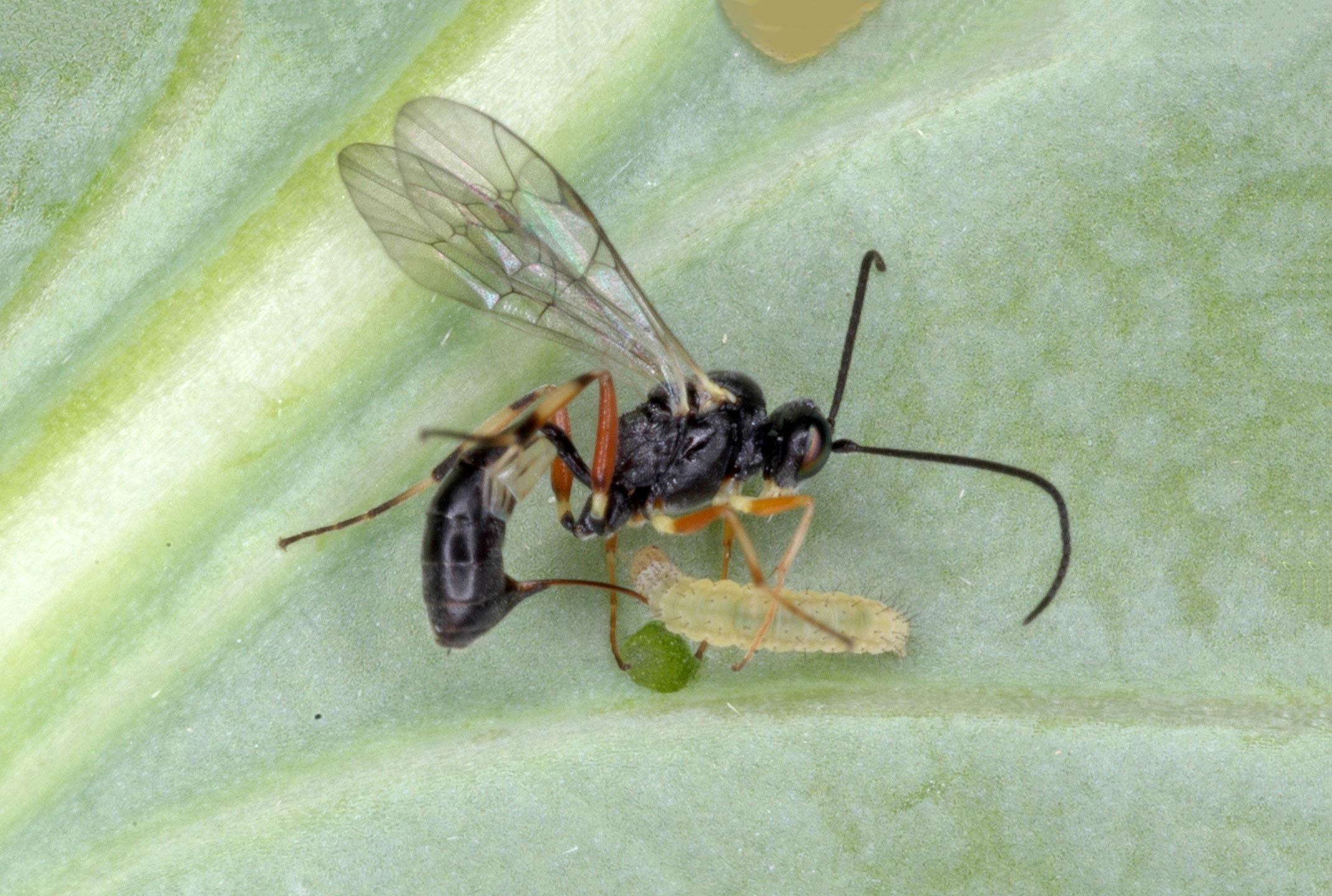 Natural Pest Control: Biological Control of Insect Pests Is Farmers Saving Billions of Dollars