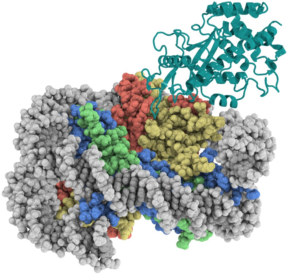 Researchers reveal safeguarding of key DNA sensor in innate immune system