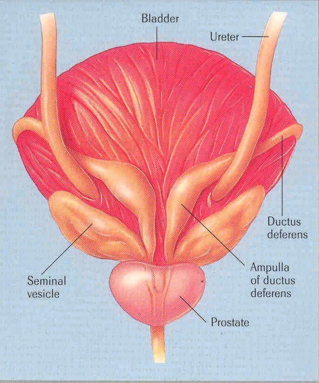 Hasnyálmirigyrák súlygyarapodás, A hasnyálmirigy-rák okai