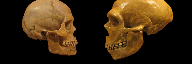 Not-so-hostile takeover: Human Y chromosome displaced the Neanderthals' version