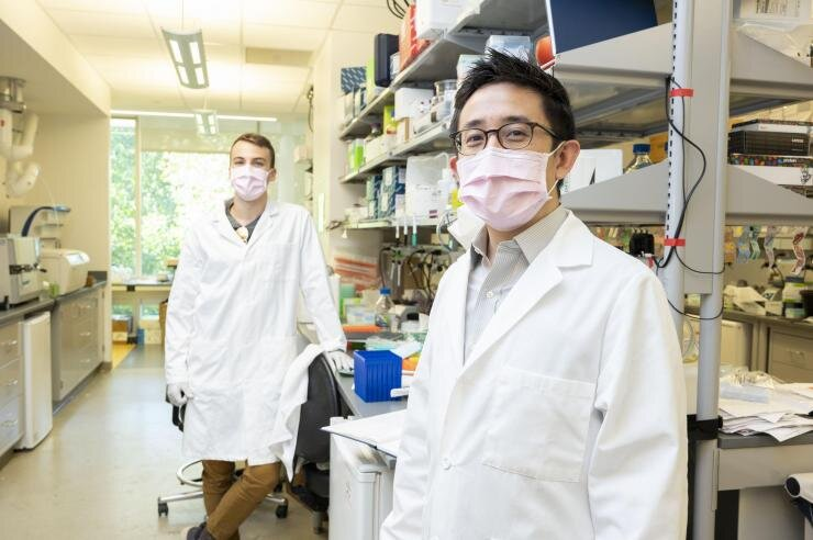 Programmable medicine is the goal for new bio-circuitry research