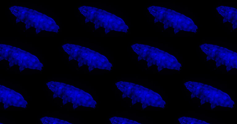 Newly-Discovered Tardigrade Glows Blue to Block Deadly Radiation