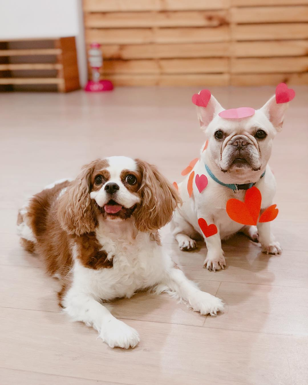 We Are The Furballs: Singapore's First Dog Cafe At Bugis+ For A Paw-fect Day Out