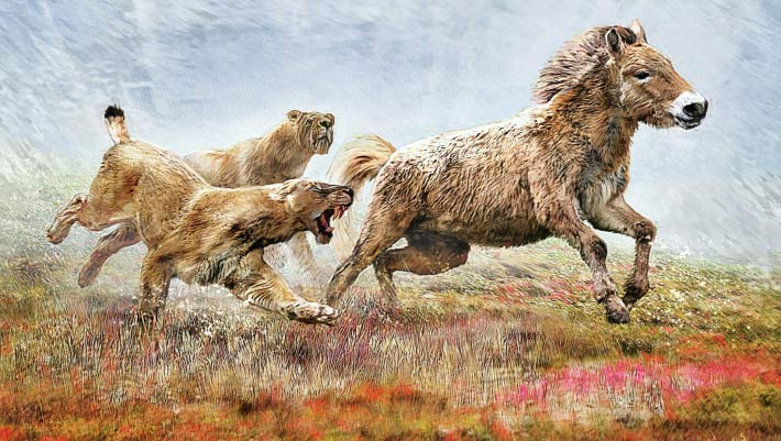 Researchers Sequence Genome of Extinct Scimitar-Toothed Cat | Genetics, Paleontology