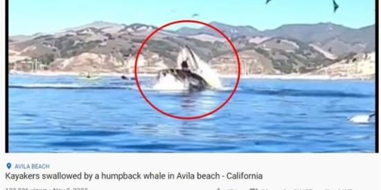超恐怖!国外2游客划独木舟惨遭鲸鱼连船一口吞下,旁人目睹吓傻