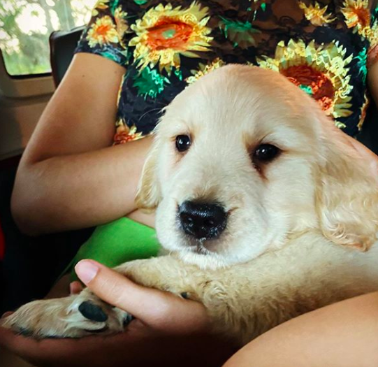 Shawn Mendes and Camila Cabello adopt a new puppy