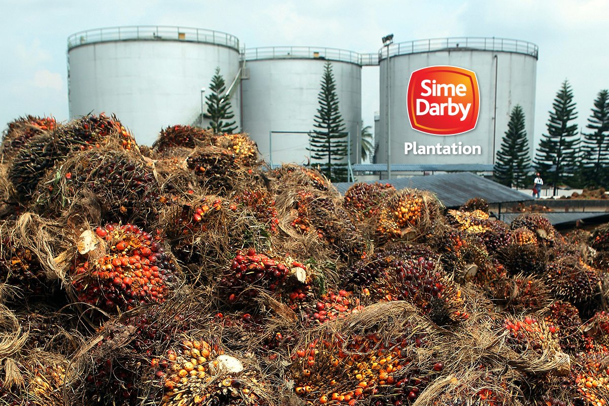 NGO Shift exits Sime Darby Plantation rights panel over company's lawsuit