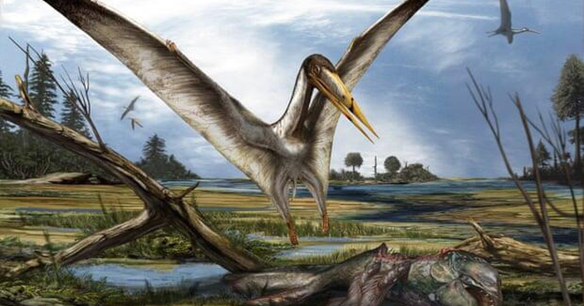 Mysterious remains of ancient flying reptile found hidden among shark fossils