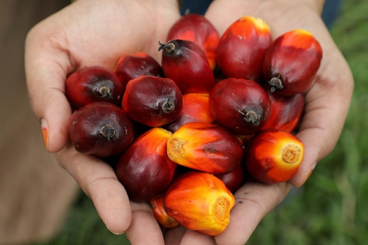 Malaysia's March-end palm oil stocks seen rising as output increases