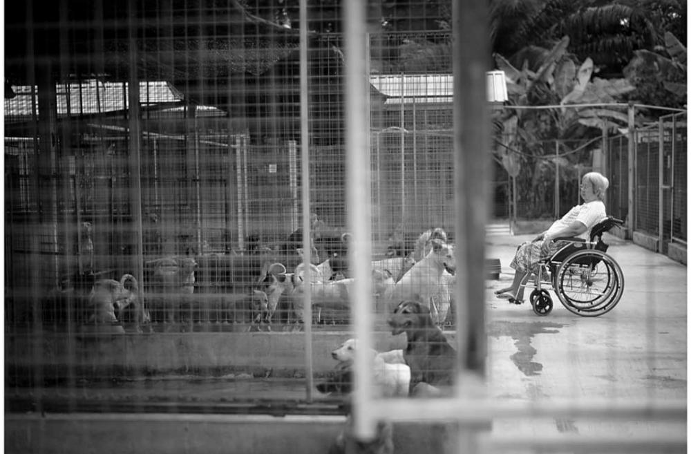 收养3000多只动物 马国收容所资金短缺面临关闭