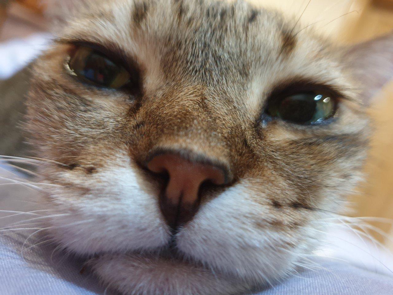 Brave Bindie, Syakirah's fur-ever protector