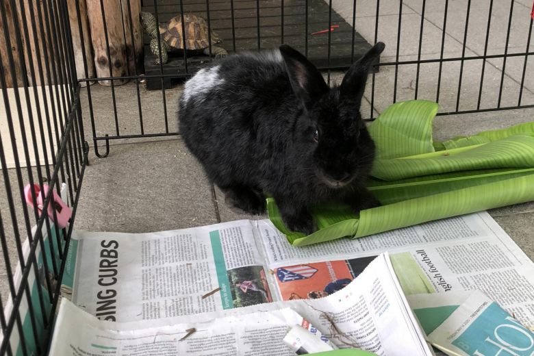 Ask The Vet: A bunny which eats its own poo, and a Westie which prefers rice to dry kibble