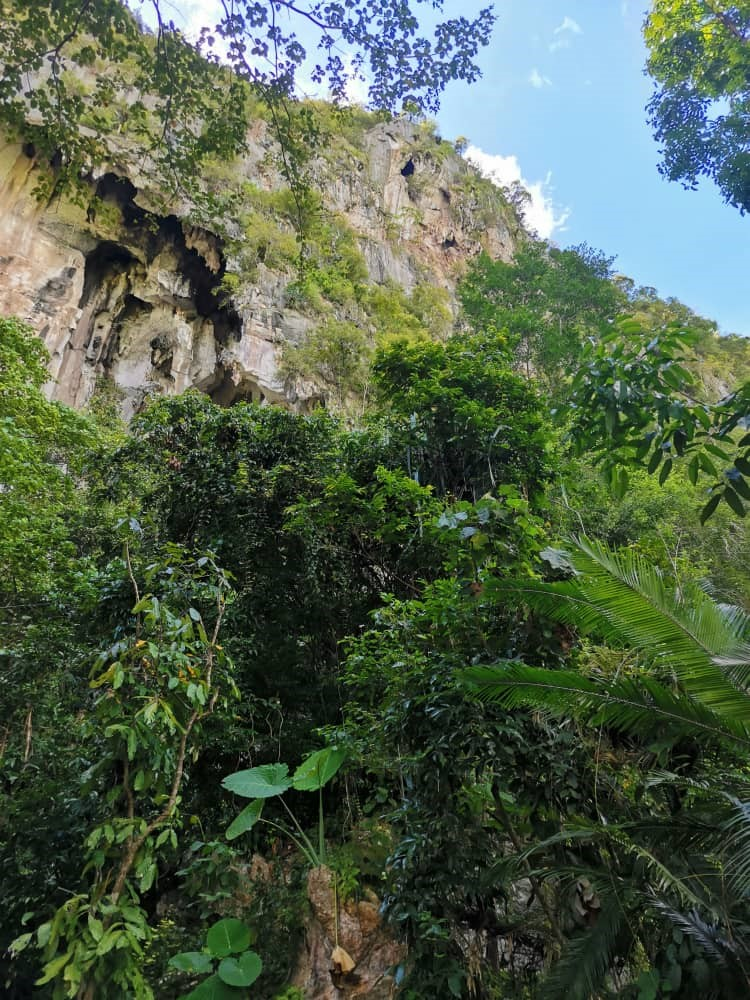 攀钟乳石洞寻观赏树 农夫失足高处跌死