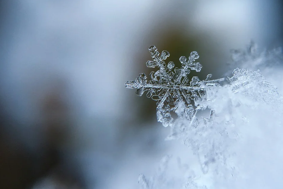 节气 | 小雪到,天气转凉,多吃些温补美食吧!