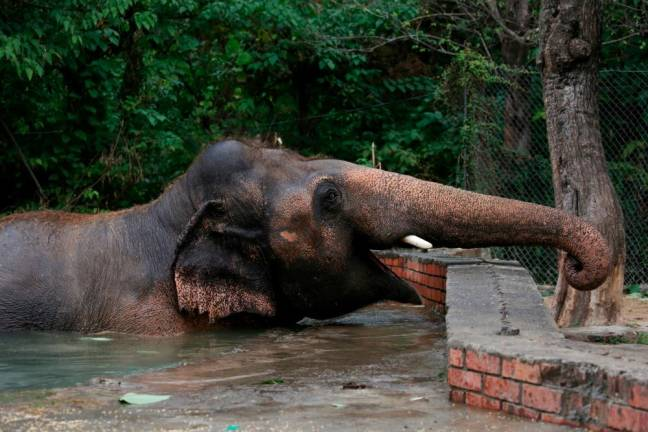 Pakistan's lonely elephant's farewell