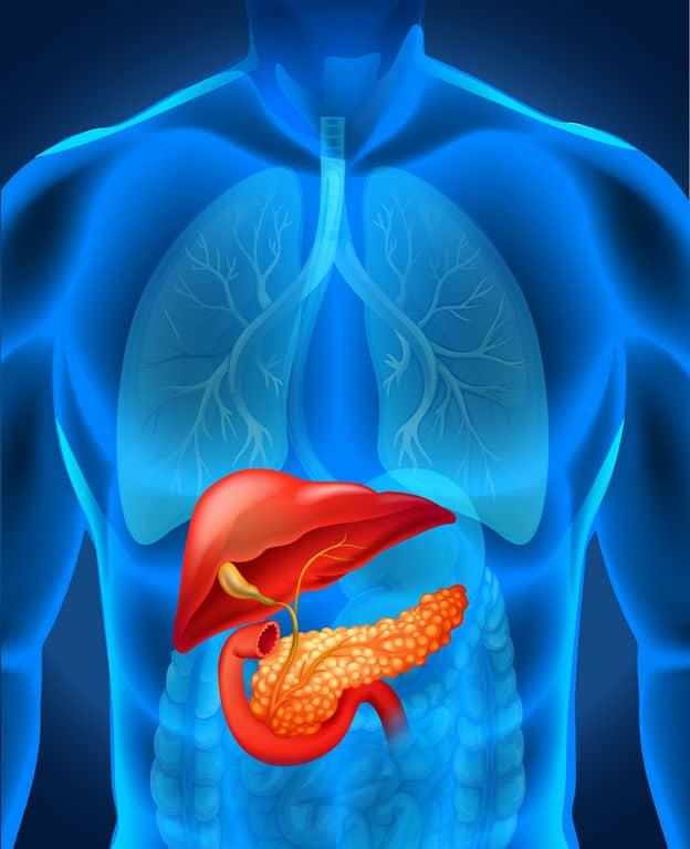 胰脏癌 无声杀手注意3大病徵 与高龄、烟酒、肥胖有关