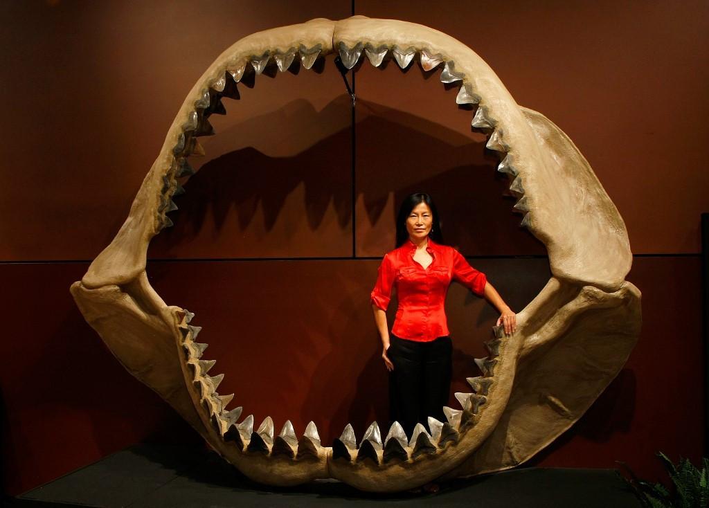 Prehistoric mega-shark raised its young in nurseries: Study
