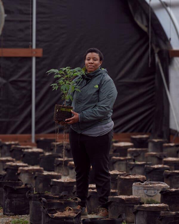 Can Cannabis Farms Weather Wildfire Season?