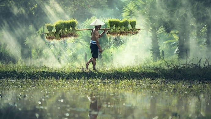 What Asia's smallholder farmers really need and why startups should lead this uncontested race
