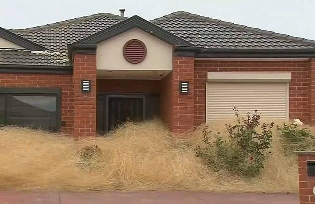 澳大利亚墨尔本一住宅区遭风滚草入侵 数十居民被困家中