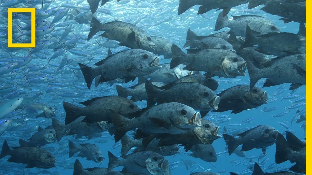 Protecting the Ocean Benefits Both People and Nature | Pristine Seas