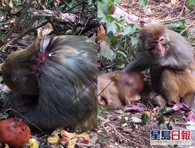 网民质疑桂林七星公园捕杀猕猴太残忍 官方:已全面叫停