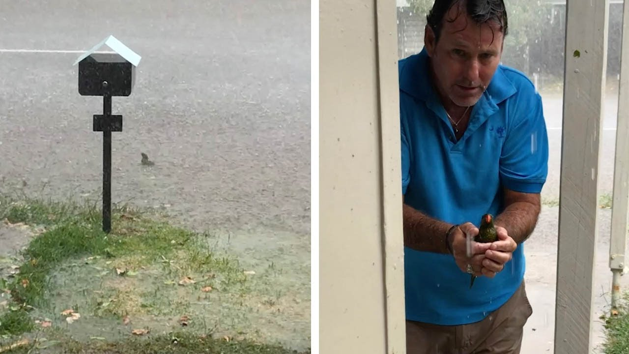 Heroic Man Saves Shivering Bird From Hail Storm